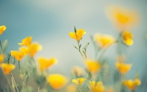Little Yellow Flowers wallpaper