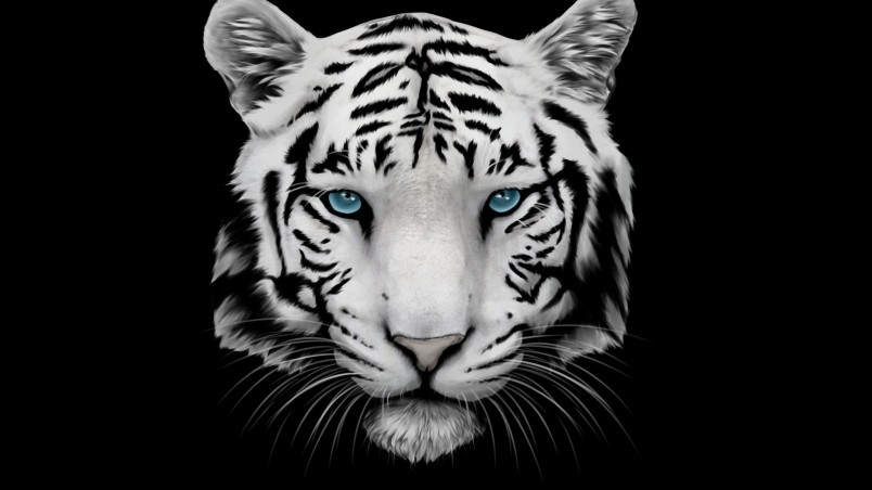 White Tiger and Blue Eyes HD Wallpaper - WallpaperFX