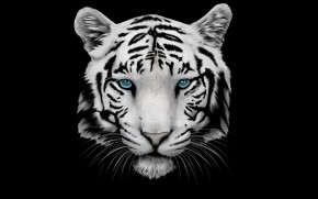 White Tiger and Blue Eyes wallpaper