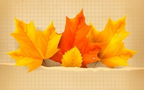 3 Beautiful Autumn Leaves wallpaper