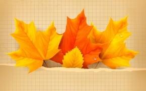 3 Beautiful Autumn Leaves