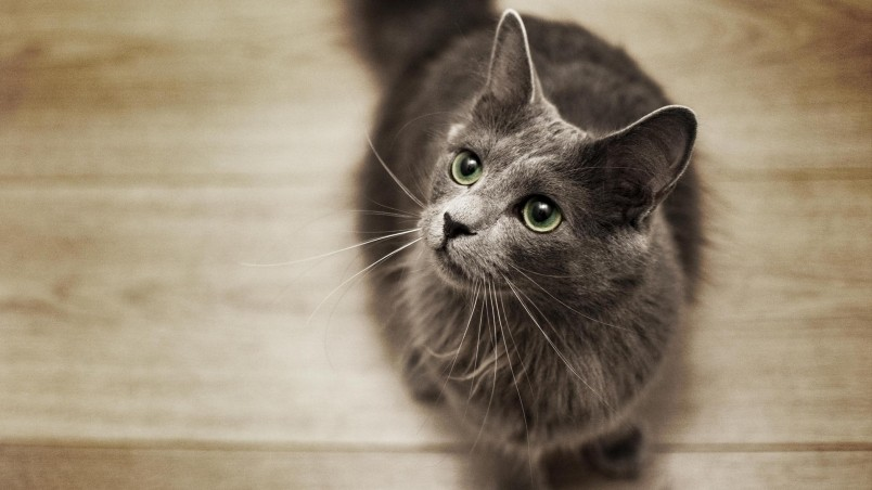 Котенок смотрящий вверх загрузить