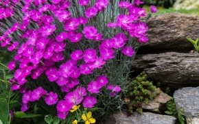 Gorgeous Spring Purple Flowers wallpaper