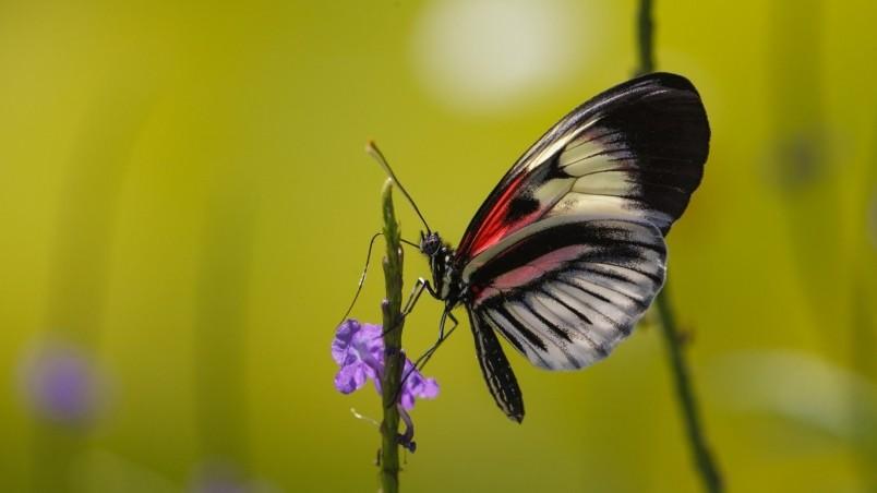 Cute Butterfly HD Wallpaper - WallpaperFX