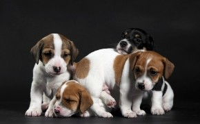 Cute Little Puppies wallpaper