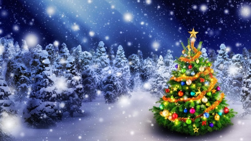 Good Quality Christmas Trees