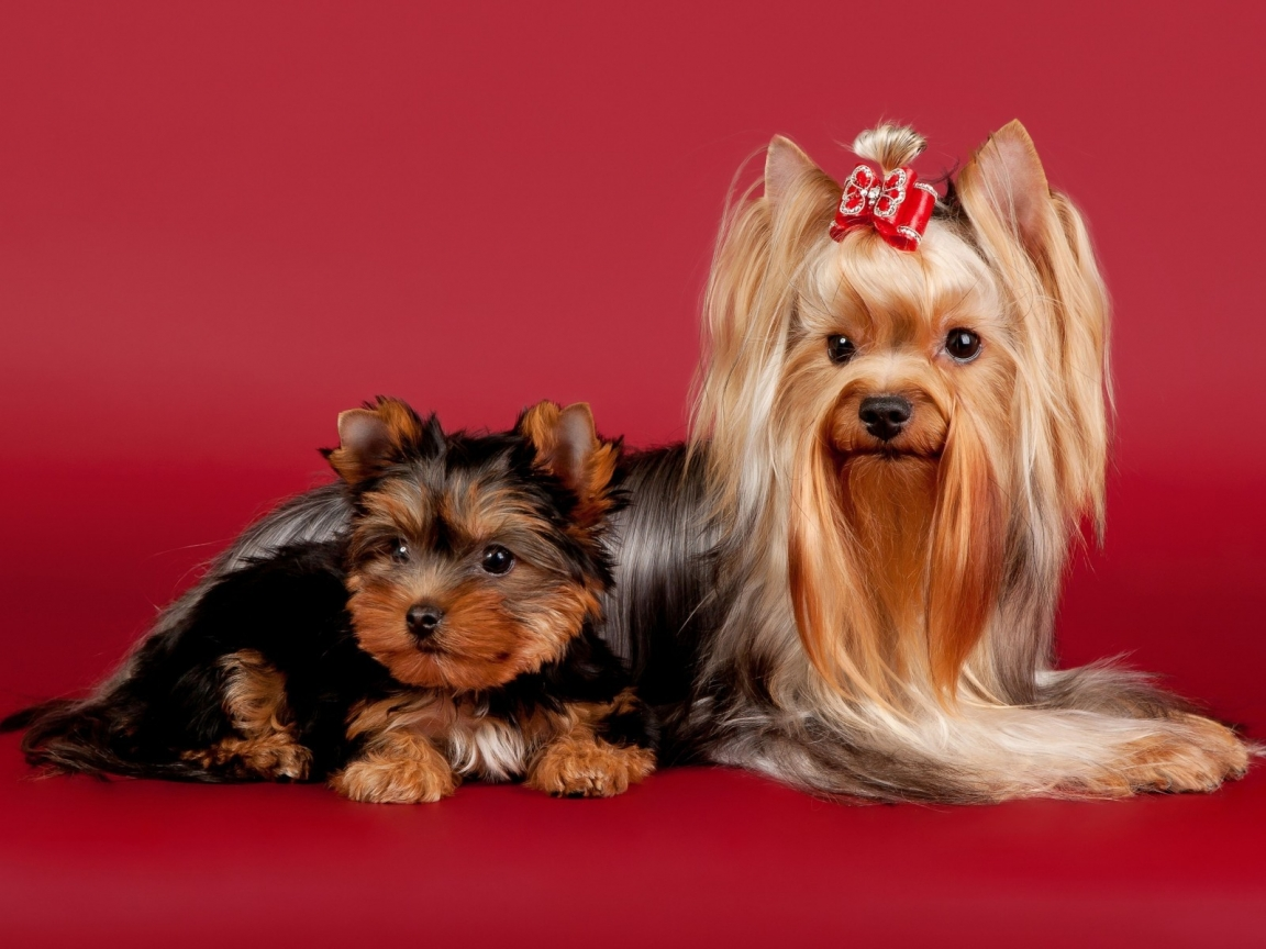 2 Cute Dogs for 1152 x 864 resolution