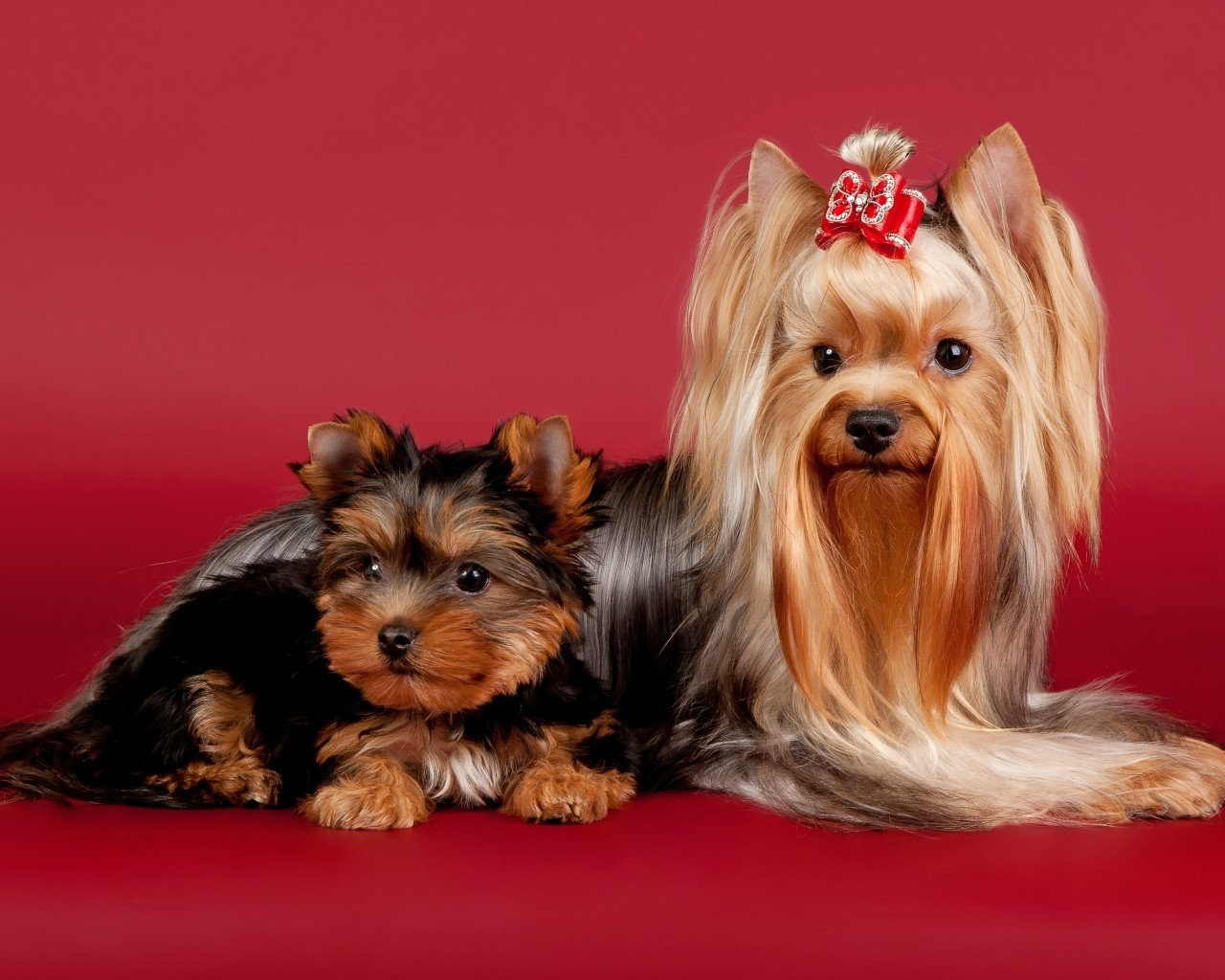 2 Cute Dogs for 1280 x 1024 resolution
