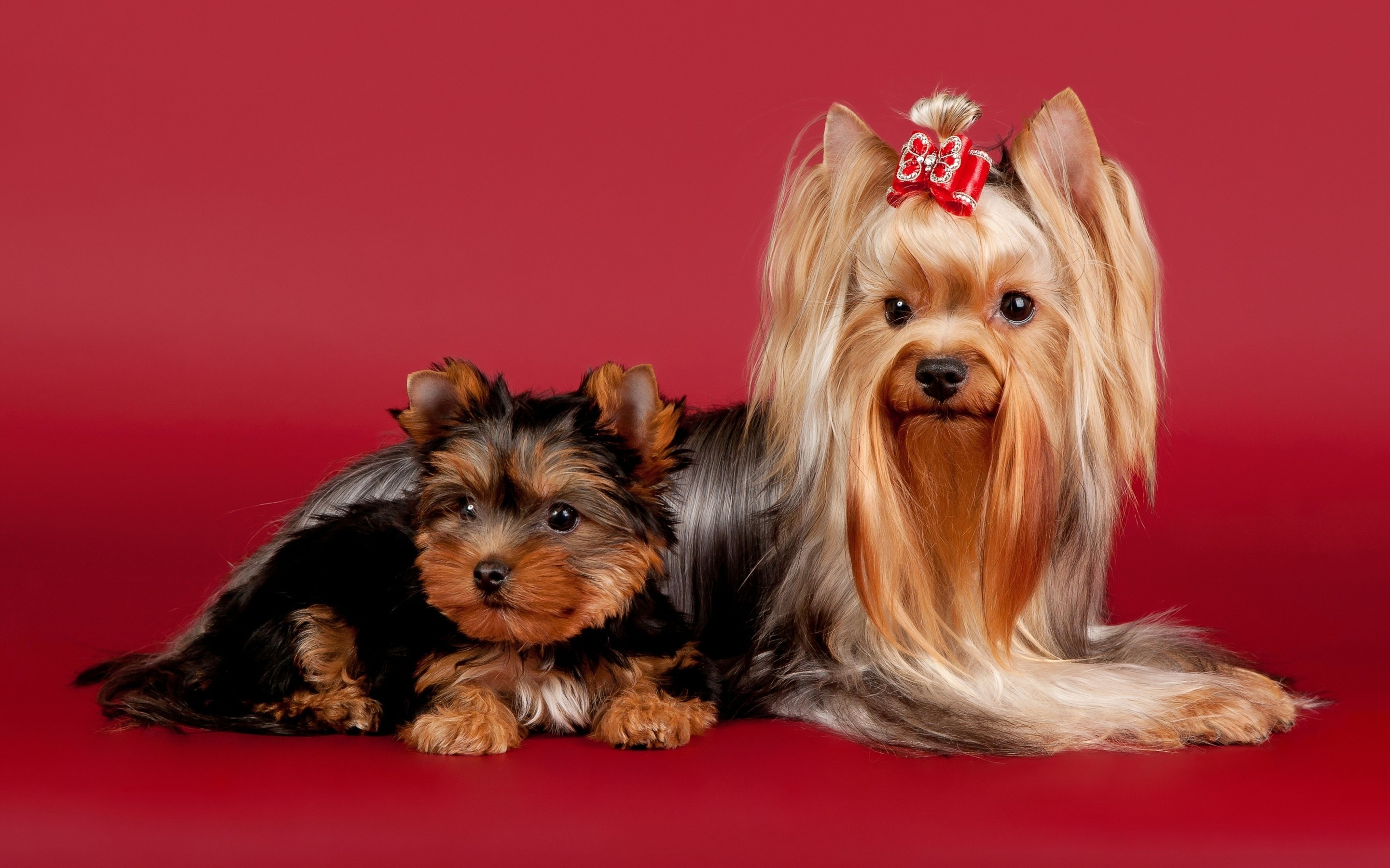 2 Cute Dogs for 2880 x 1800 Retina Display resolution
