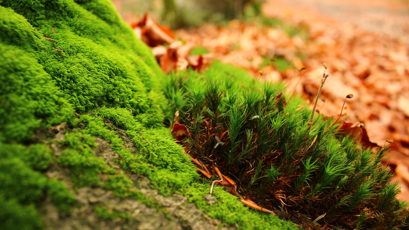 Amazing Moss for 1366 x 768 HDTV resolution