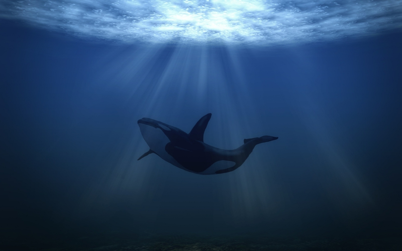 Big Whale Underwater for 1280 x 800 widescreen resolution