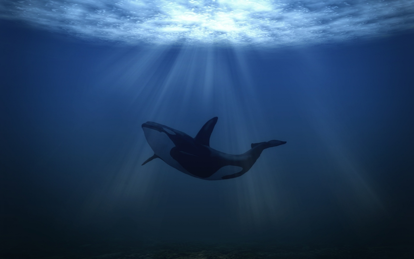 Big Whale Underwater for 1440 x 900 widescreen resolution