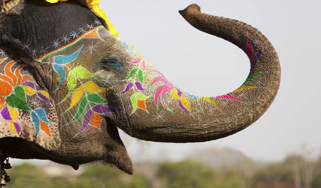 Colored Elephant for 1024 x 600 widescreen resolution