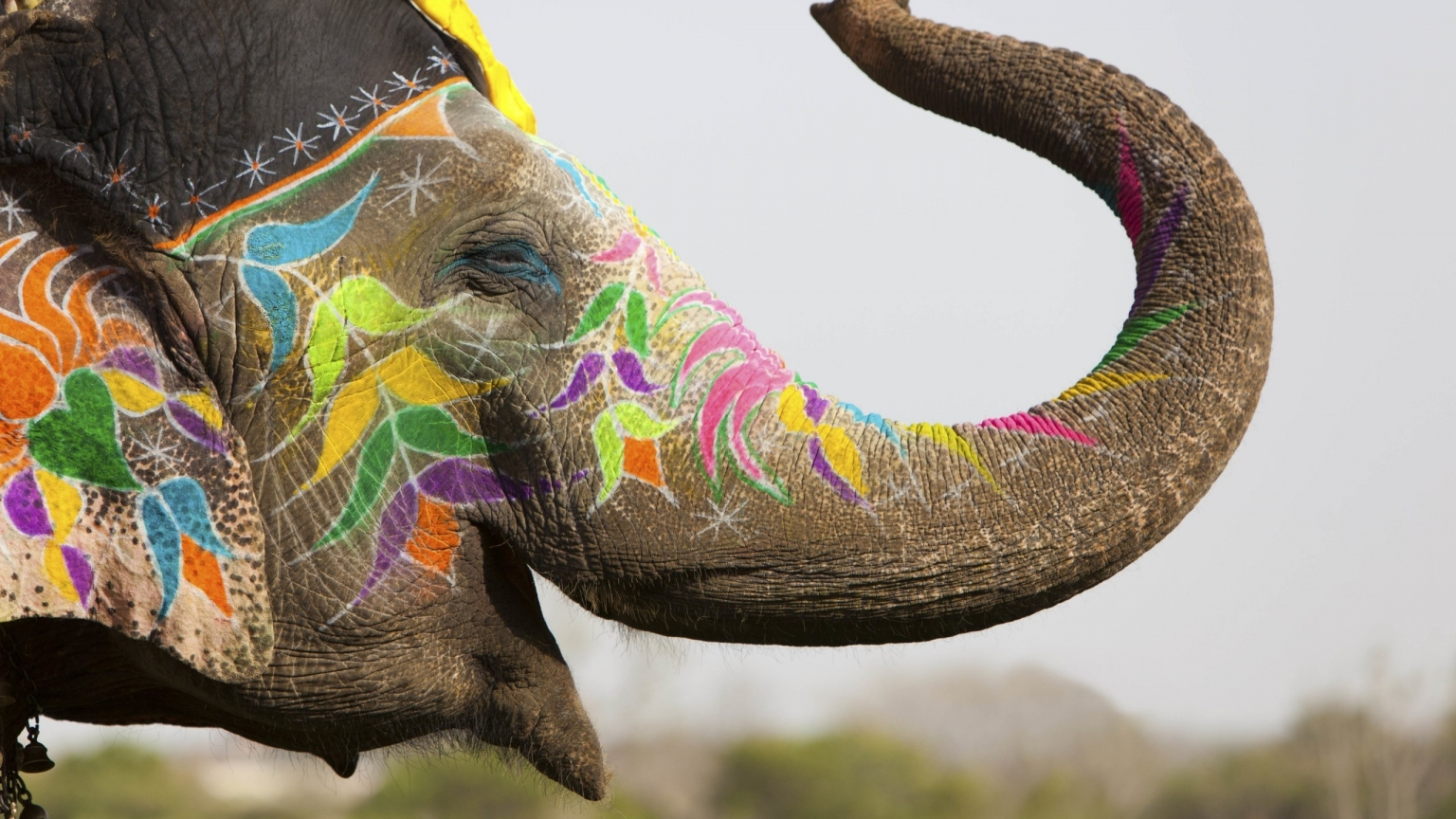 Colored Elephant for 1536 x 864 HDTV resolution