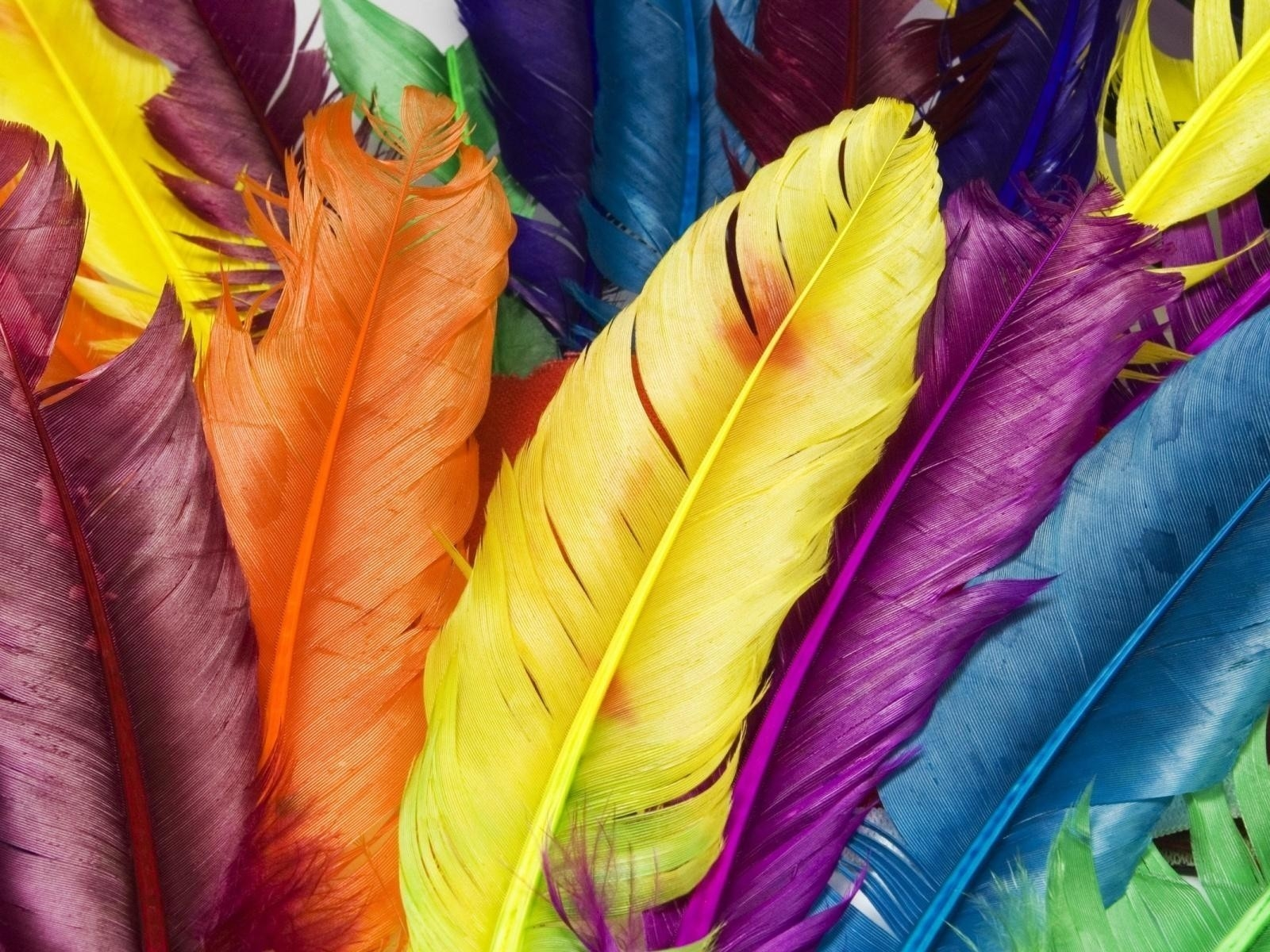Colorful Feathers for 1600 x 1200 resolution
