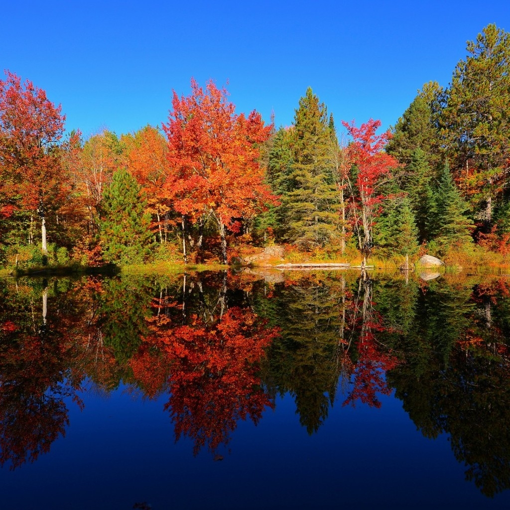 Colourful Forest Reflection for 1024 x 1024 iPad resolution