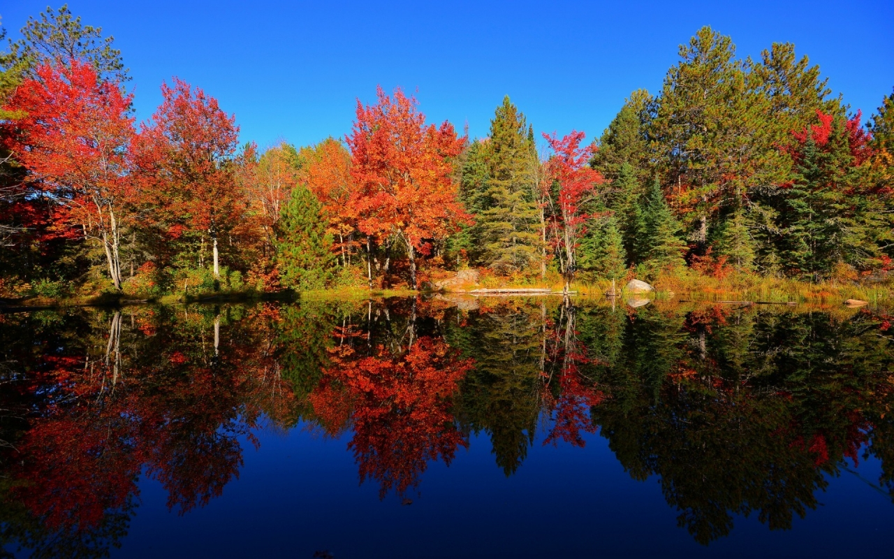 Colourful Forest Reflection for 1280 x 800 widescreen resolution