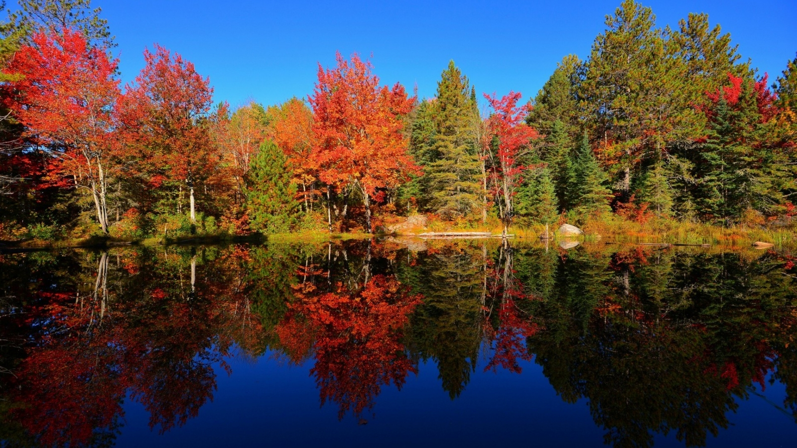 Colourful Forest Reflection for 1600 x 900 HDTV resolution