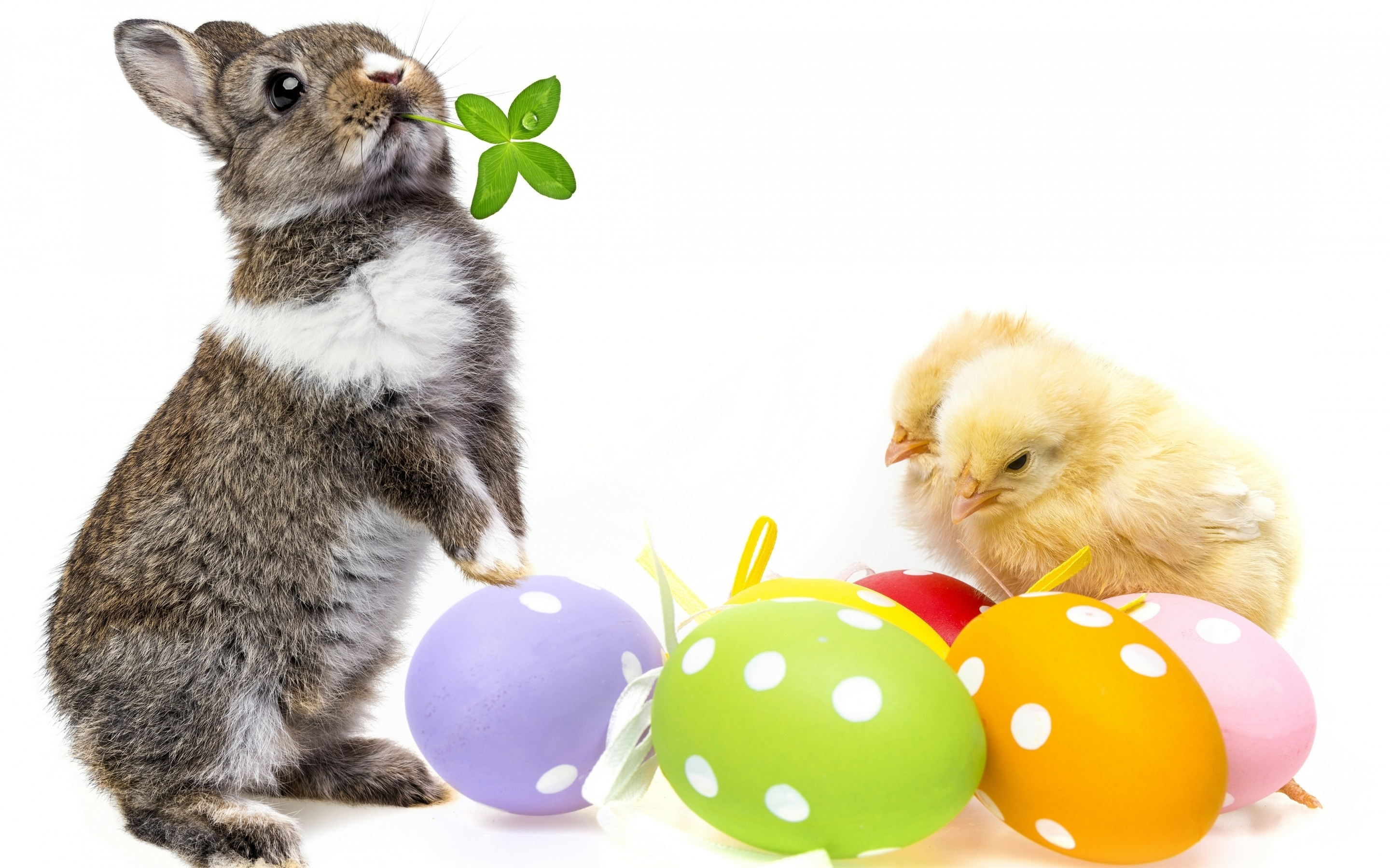 Cute Easter Bunny for 2880 x 1800 Retina Display resolution