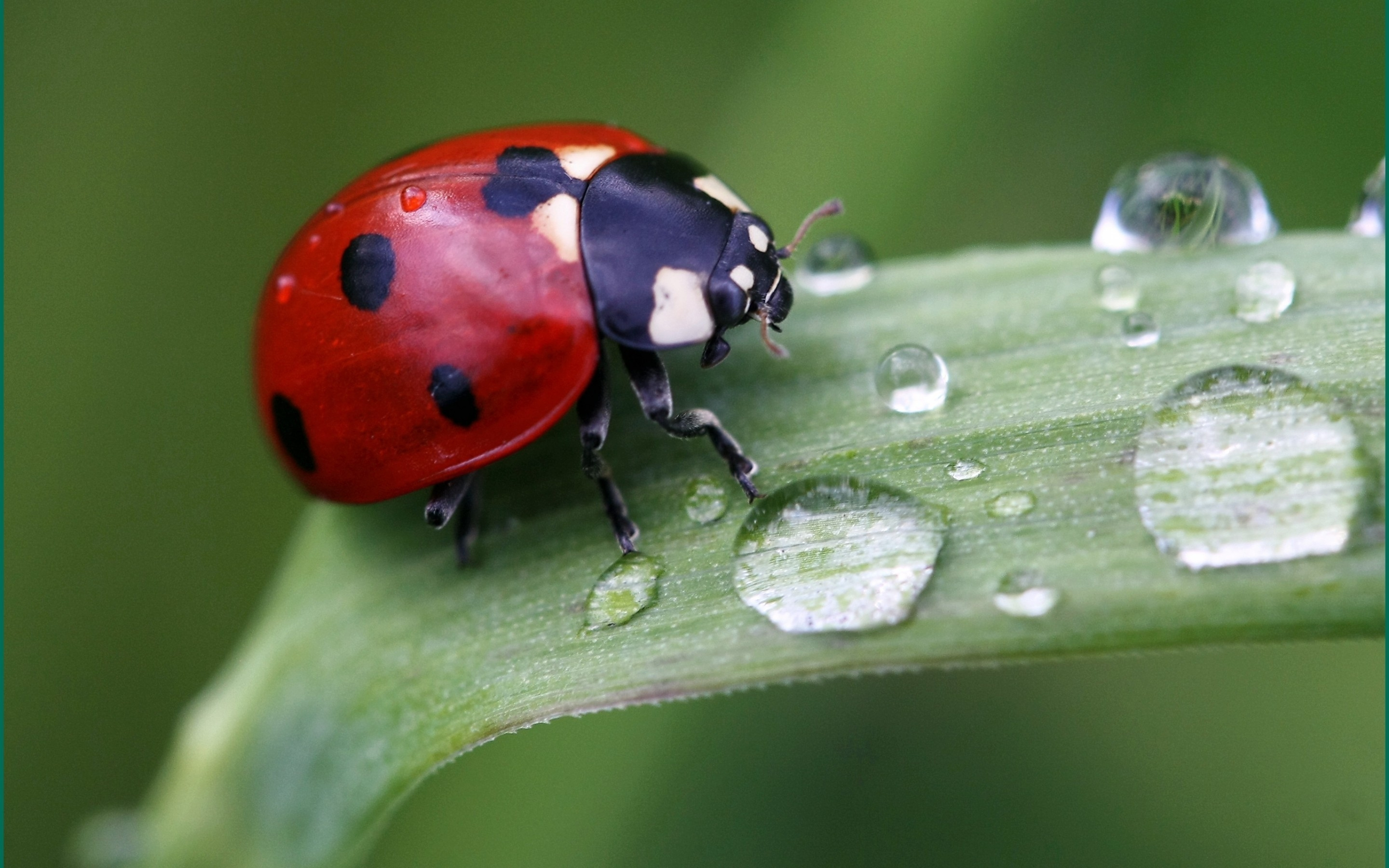 Cute Ladybird for 2880 x 1800 Retina Display resolution