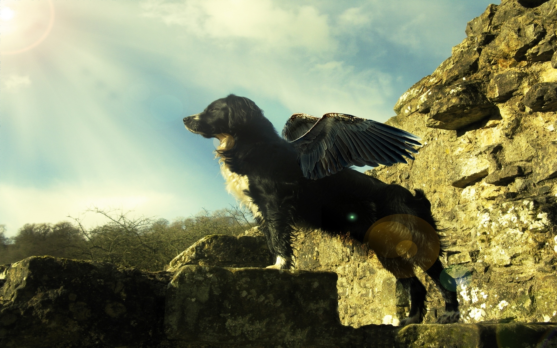 Flying dog for 1920 x 1200 widescreen resolution