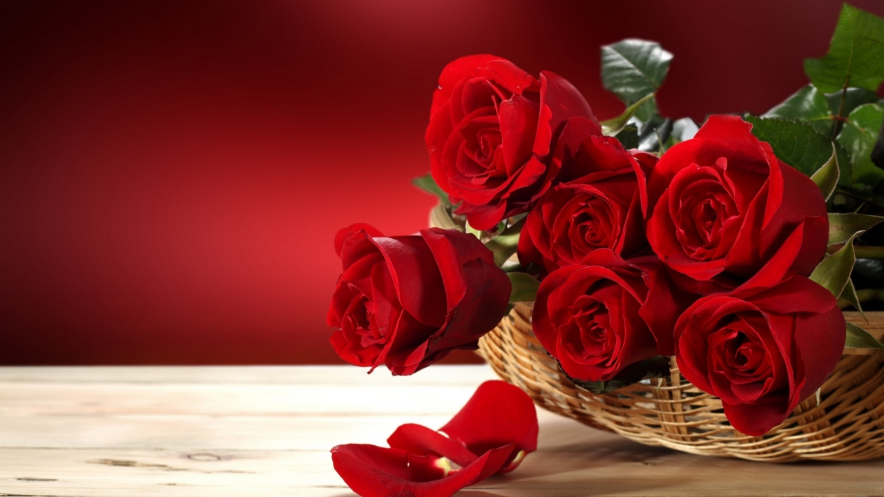 Fresh Red Roses for 1280 x 720 HDTV 720p resolution