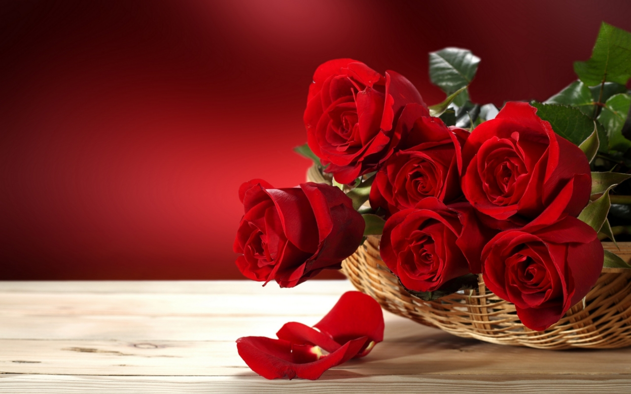 Fresh Red Roses for 1280 x 800 widescreen resolution