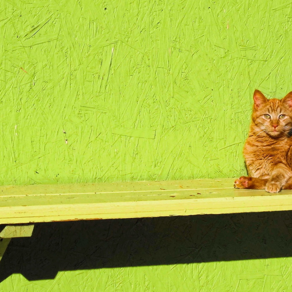 Ginger Cat Sitting on a Bench for 1024 x 1024 iPad resolution