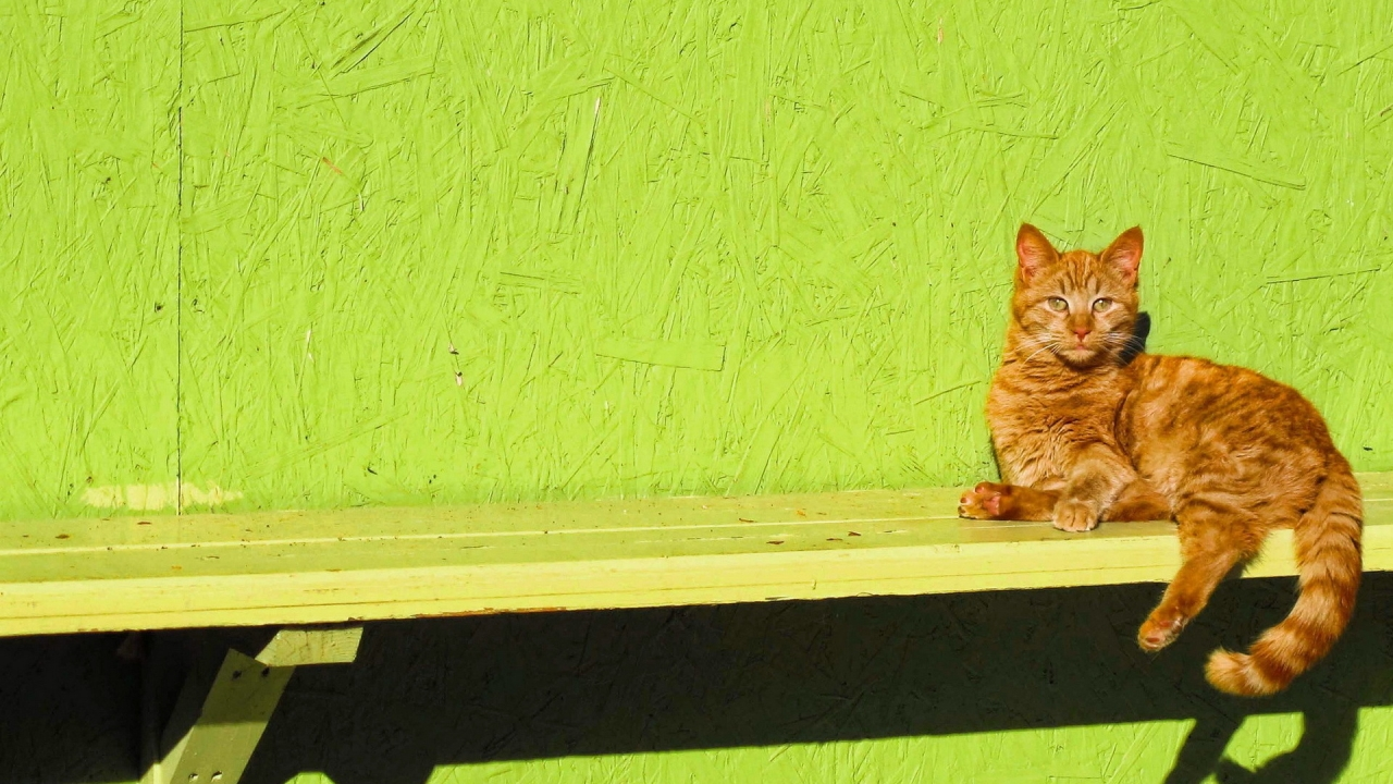 Ginger Cat Sitting on a Bench for 1280 x 720 HDTV 720p resolution
