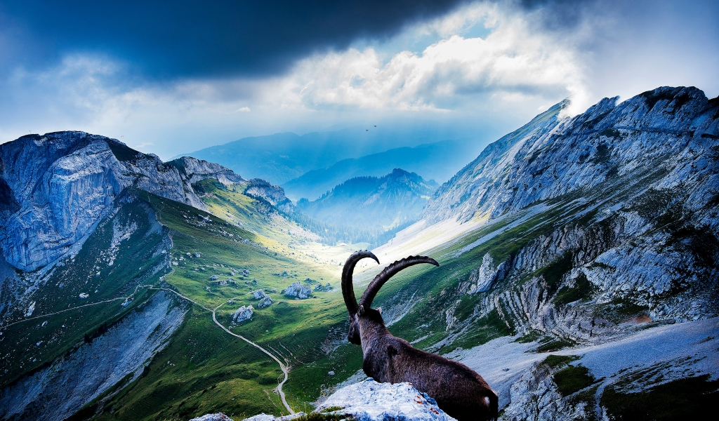 Goat at Mount Pilatus for 1024 x 600 widescreen resolution