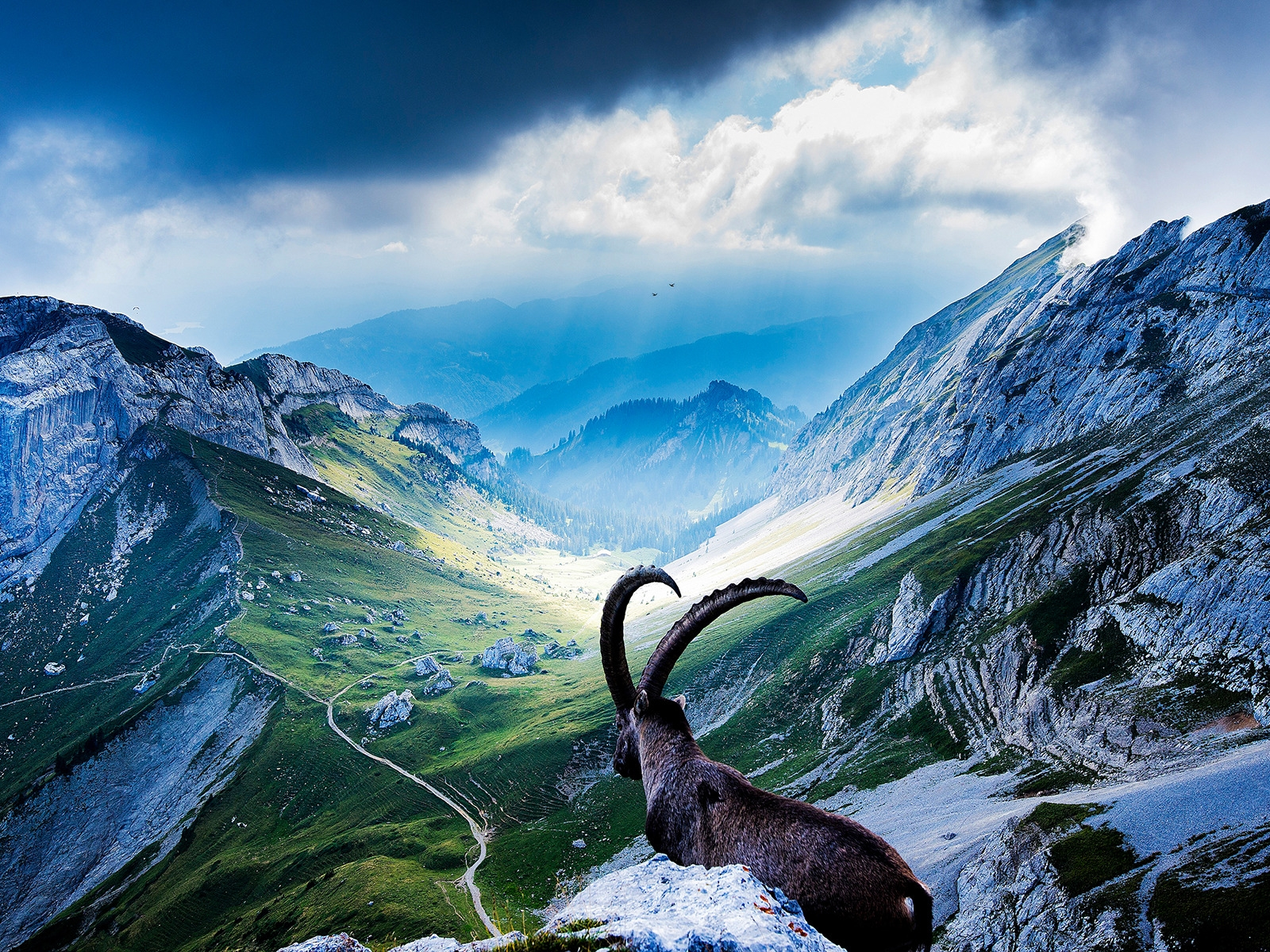 Goat at Mount Pilatus for 1600 x 1200 resolution