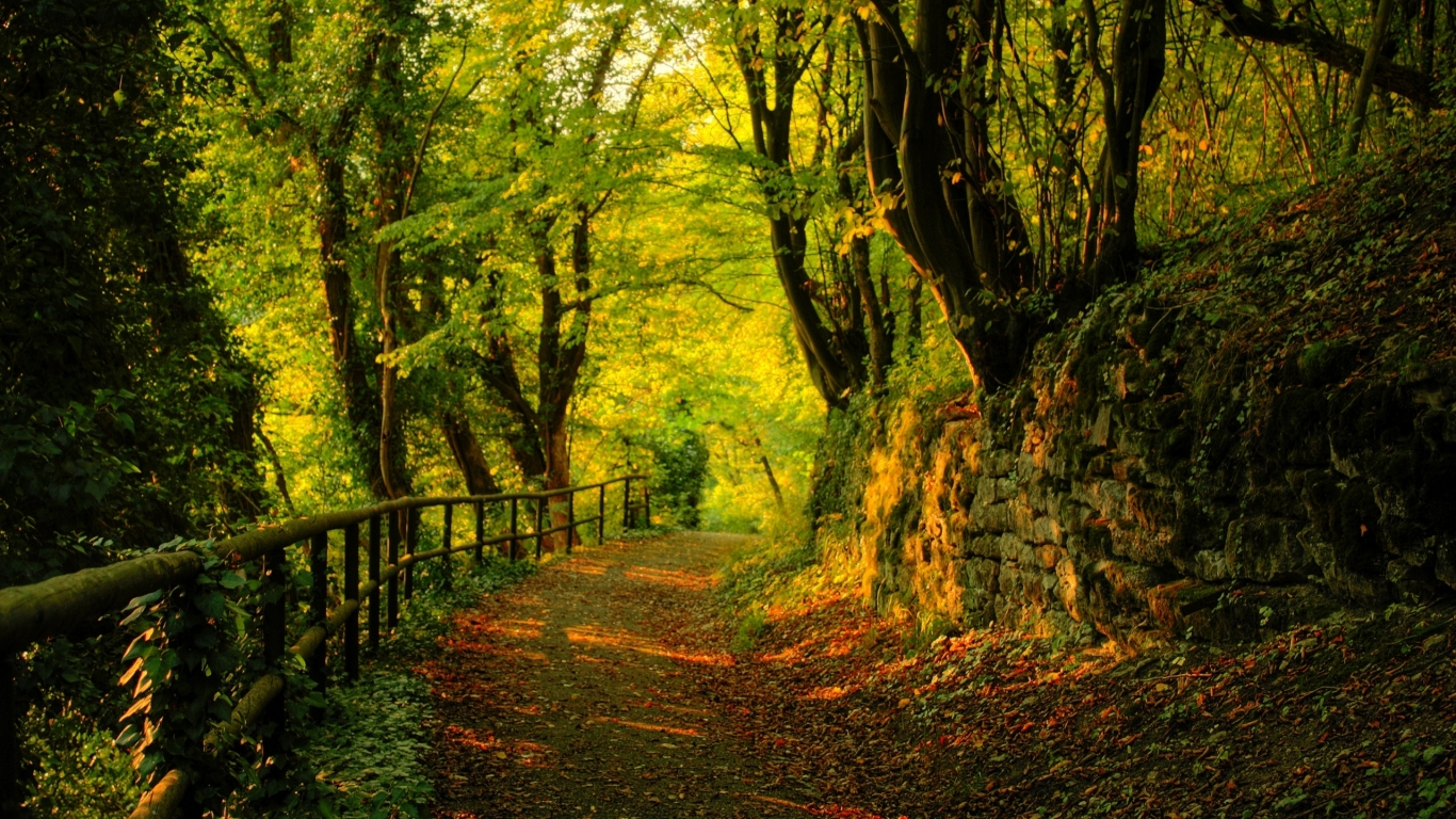 Great Autumn Forest View for 1366 x 768 HDTV resolution