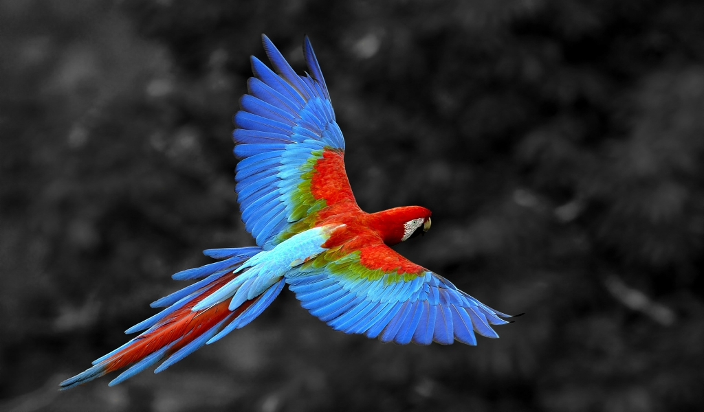 Great Colorful Parrot for 1024 x 600 widescreen resolution