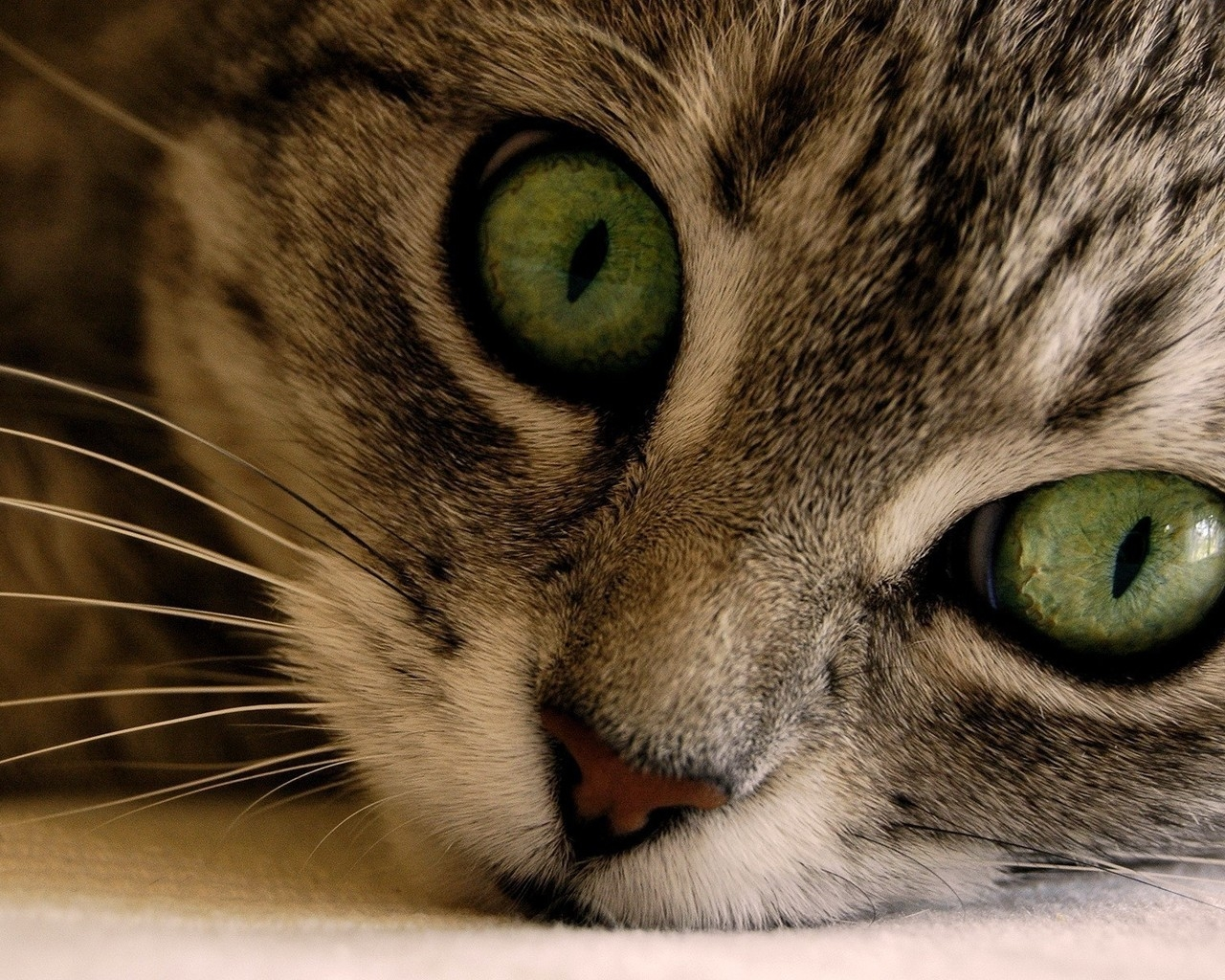 Green Eye Manx Cat for 1280 x 1024 resolution