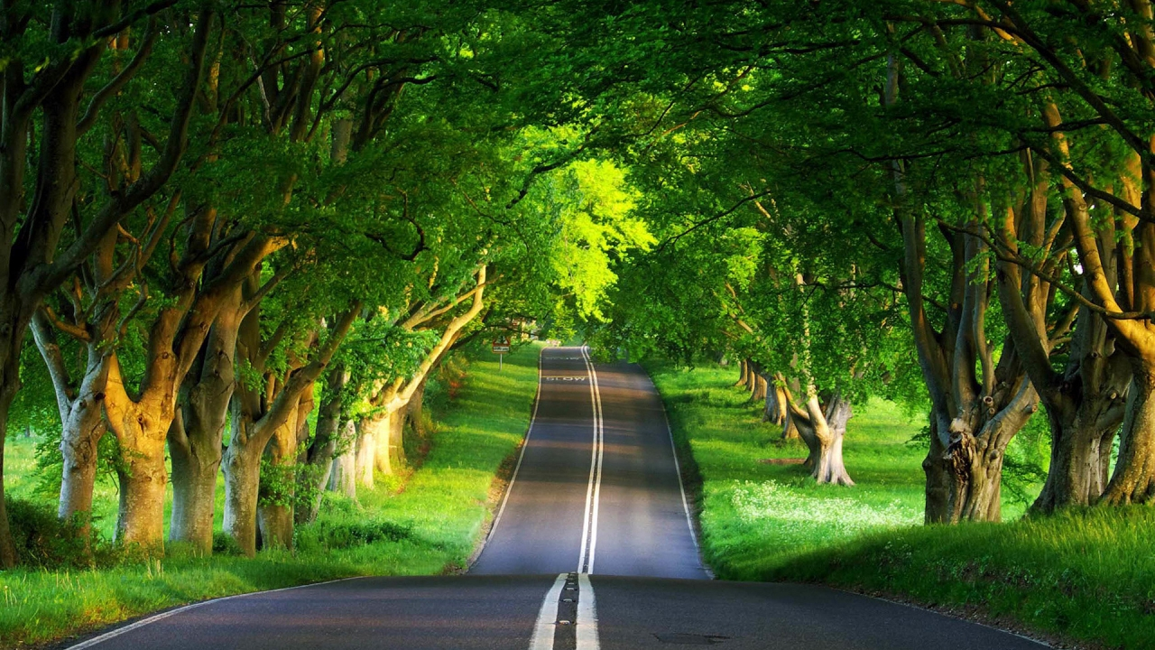 Green Road for 1280 x 720 HDTV 720p resolution