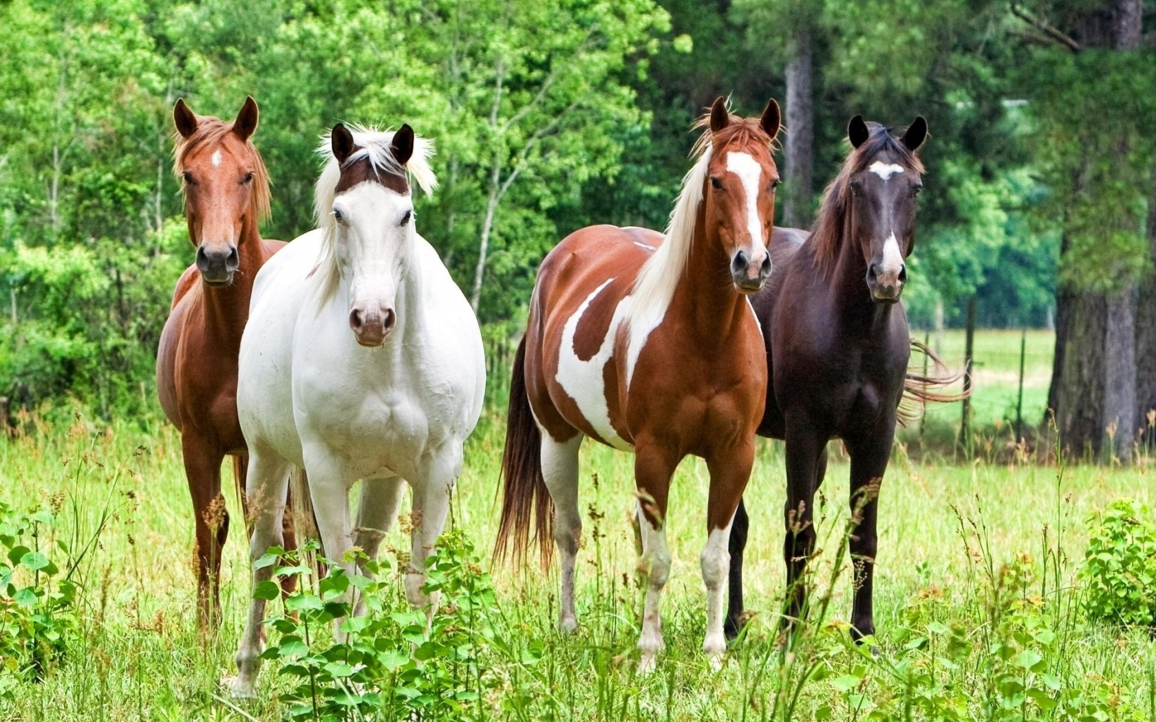 Horses for 1680 x 1050 widescreen resolution