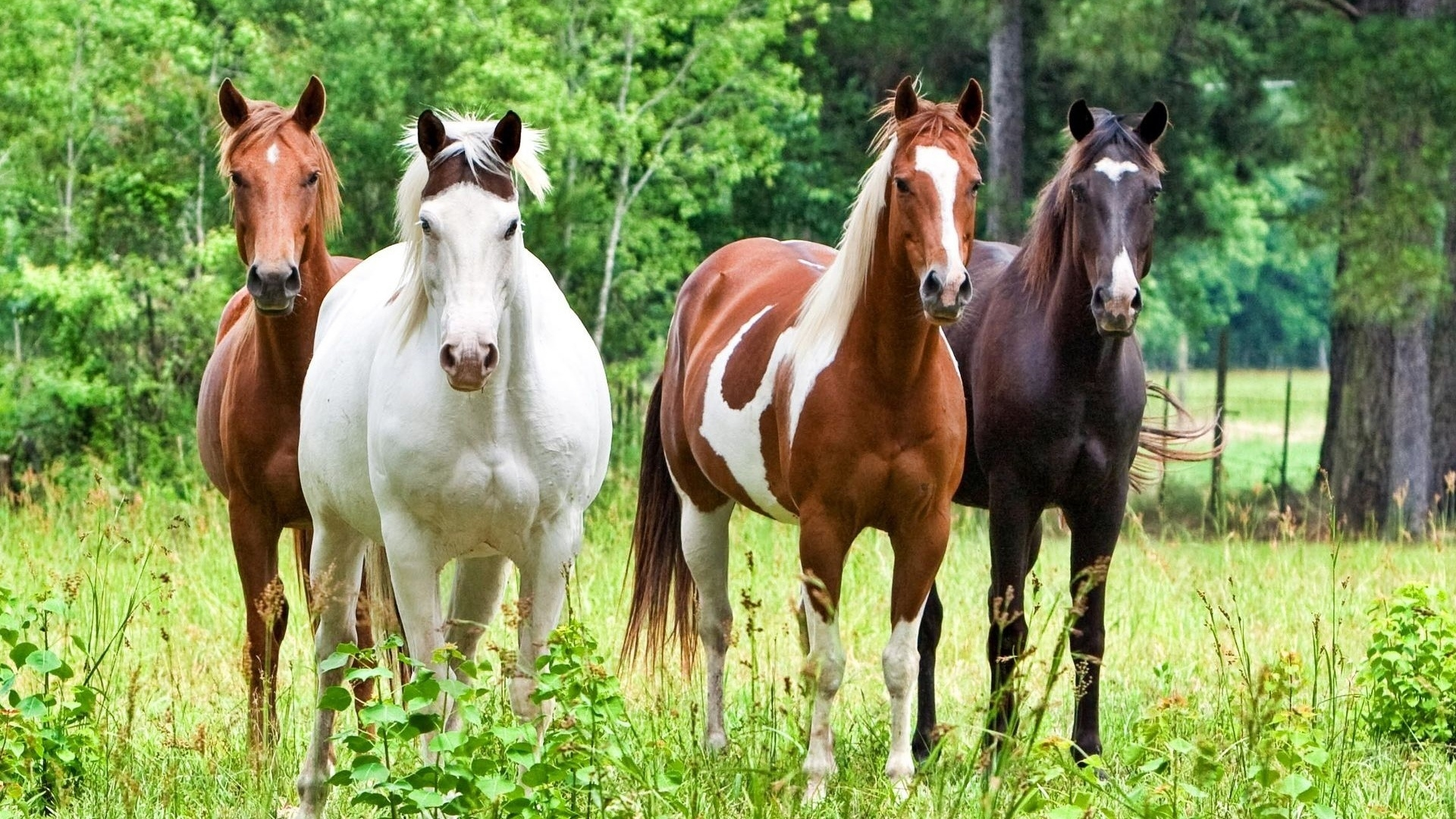 Horses for 1920 x 1080 HDTV 1080p resolution