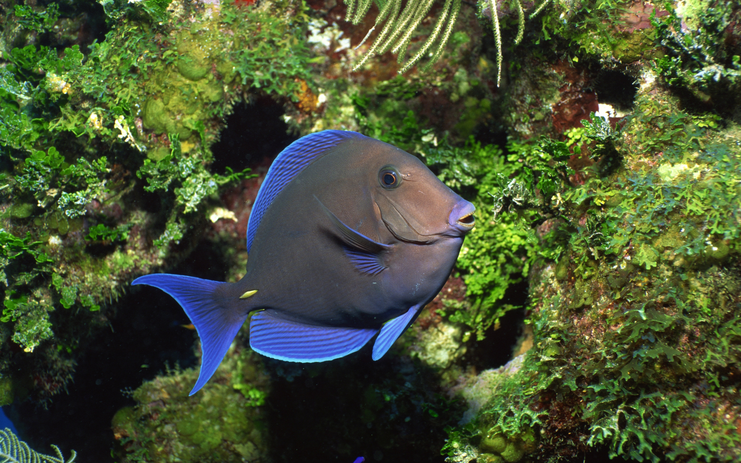 Lonly Fish Underwater for 2560 x 1600 widescreen resolution
