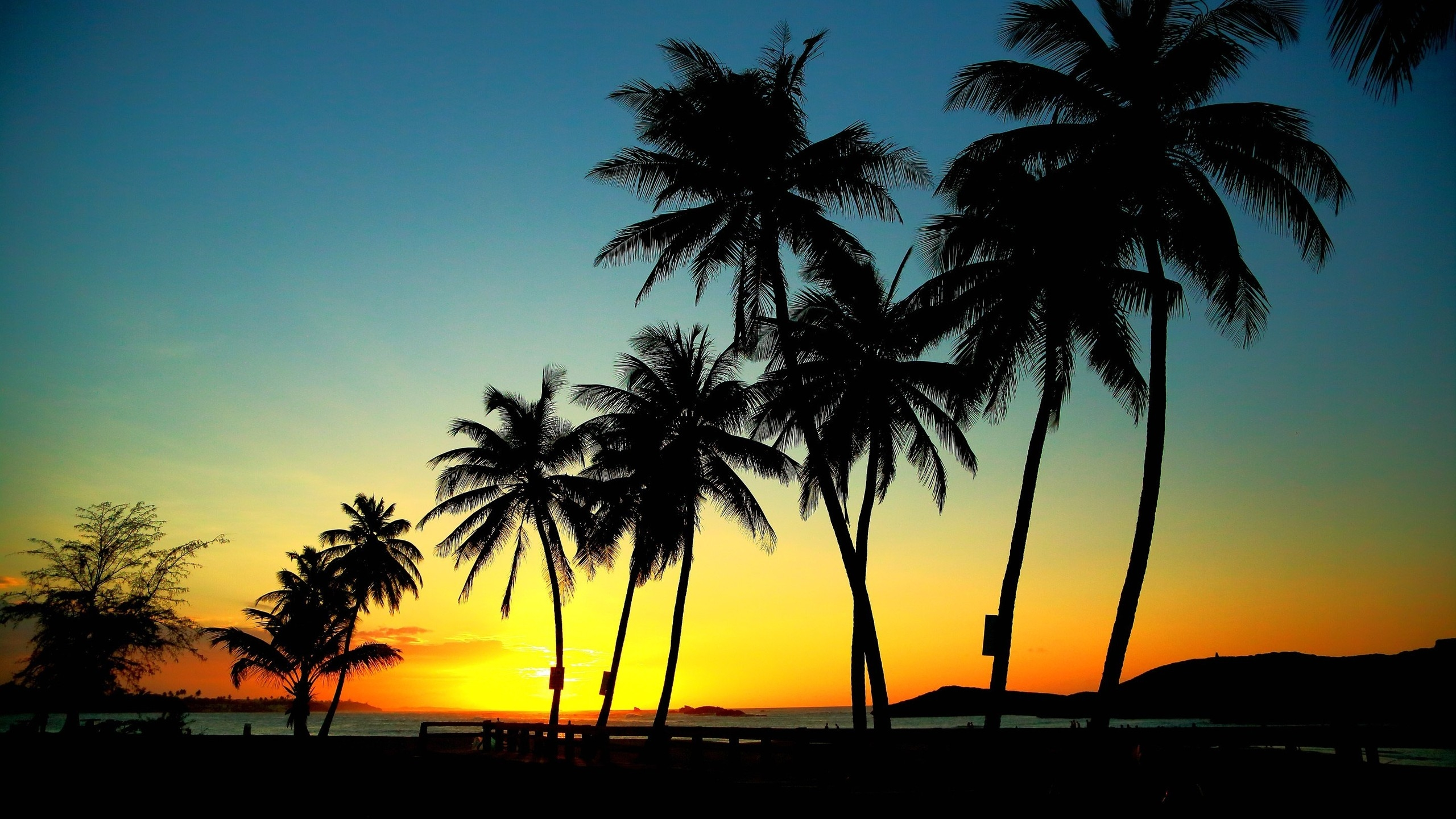 Palm Trees in Sunset for 2560x1440 HDTV resolution