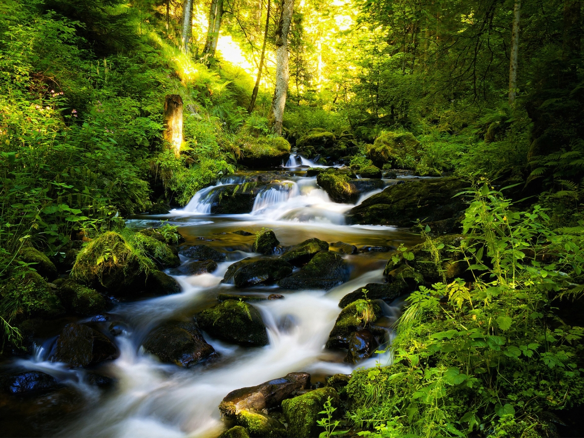 River and Green Forest for 1152 x 864 resolution