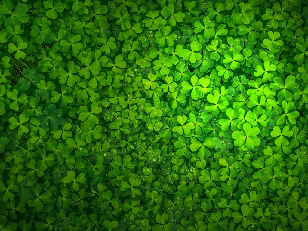 St Patrick's Day for 1024 x 768 resolution