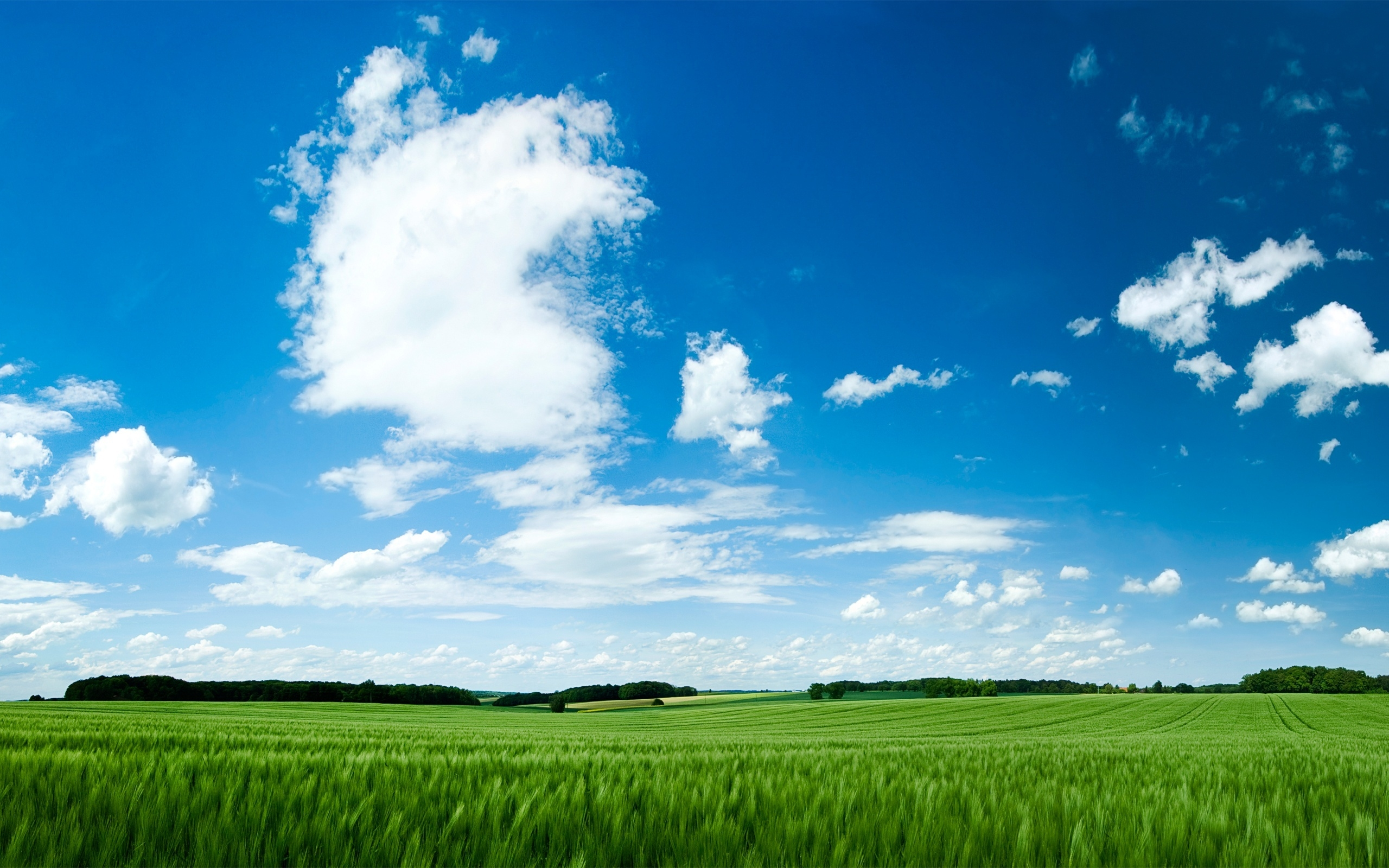 """... of """"Summer beautiful landscape"""" Wallpaper - 2560 x 1600 widescreen"""
