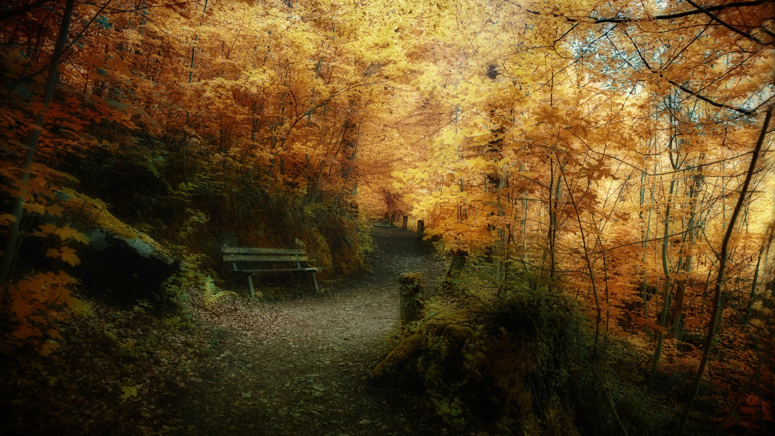 Superb Autumn forest landscape for 1536 x 864 HDTV resolution