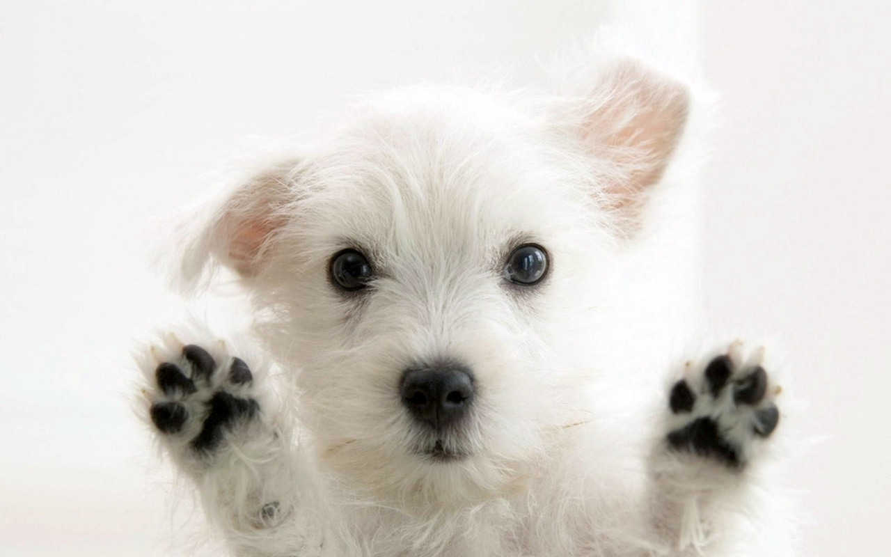 Very cute Dog for 1280 x 800 widescreen resolution