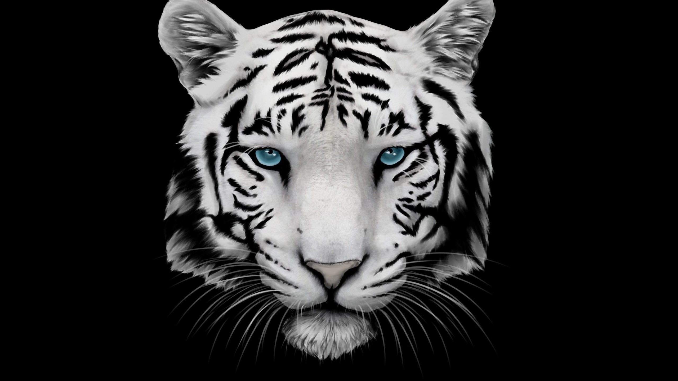 White Tiger And Blue Eyes 2560x1440 Hdtv Wallpaper
