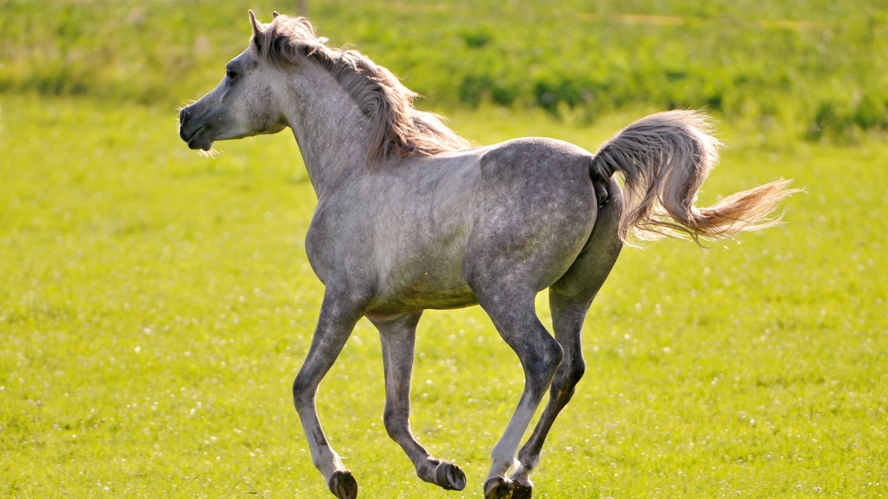 Wild Horse for 1280 x 720 HDTV 720p resolution