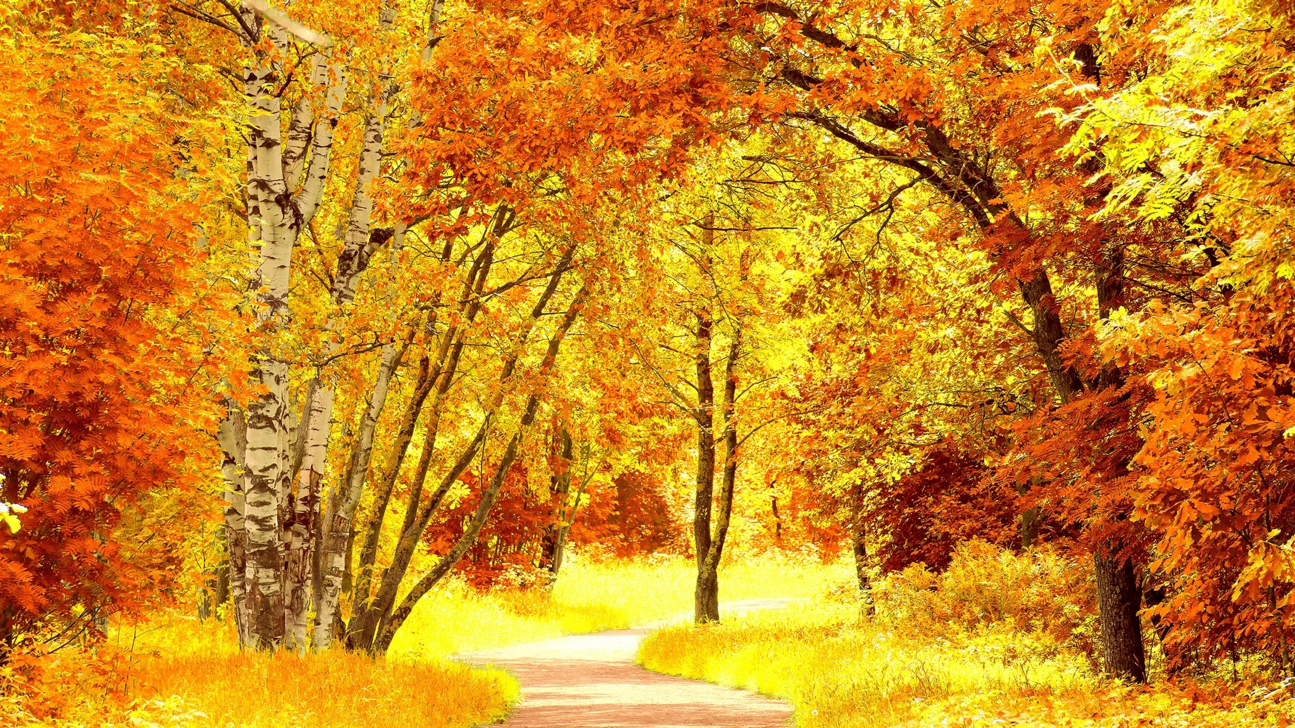 Yellow Autumn Landscape for 2560x1440 HDTV resolution
